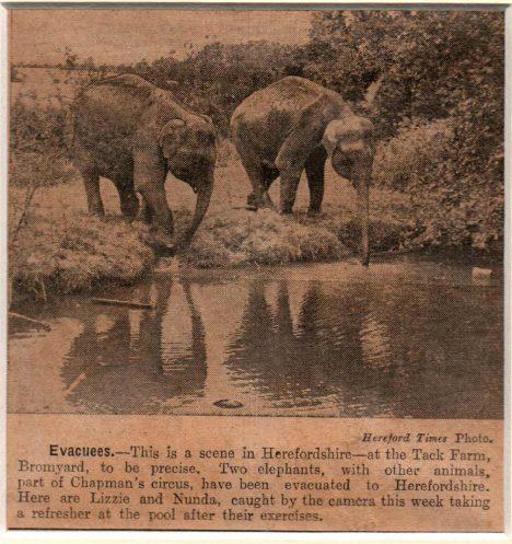 Elephants0007